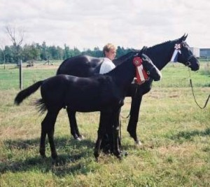 Galahad, a 2004 Geronimo colt out of a T.B. dam - On Wing's of Eagles, shown here winning the CSHA foal line class in 2004.