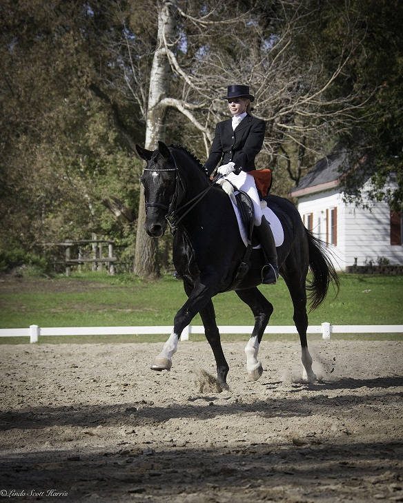 Lea Wouters riding Hanoverian Gelding, Strawinskij at Centaur Riding School owned by  Shirley Guertin - Cook.  Thank you Shirley and Linda for a wonderful day ! Photo credit thanks to: Linda Scott-Harris