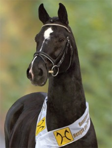 De Niro who was awarded Stallion of the Year in 2008, by the Hanoverian Society.
